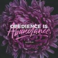 Obedience-SOCIAL
